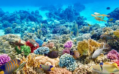 Droit comparé des Outre-mer, 7 May 2020 (Online Conference)